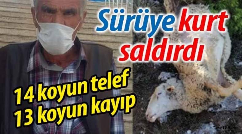 Sürüye kurt saldırdı: 14 koyun telef, 13 koyun kayıp